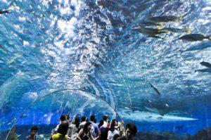 フィリピンの水族館マニラオーシャンパーク